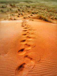 steps-dune-dunes-sand-dunes-65562